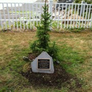 Tree and plaque photo